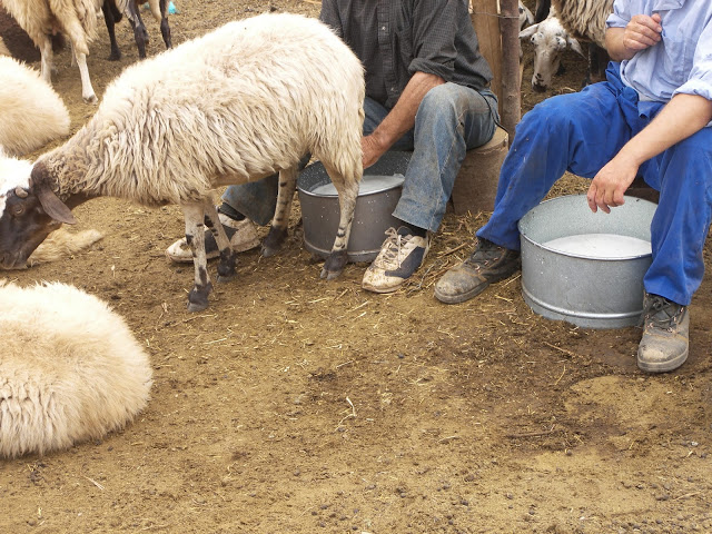 Αποτέλεσμα εικόνας για Γάλα, … χωρίς κτηνοτρόφους …
